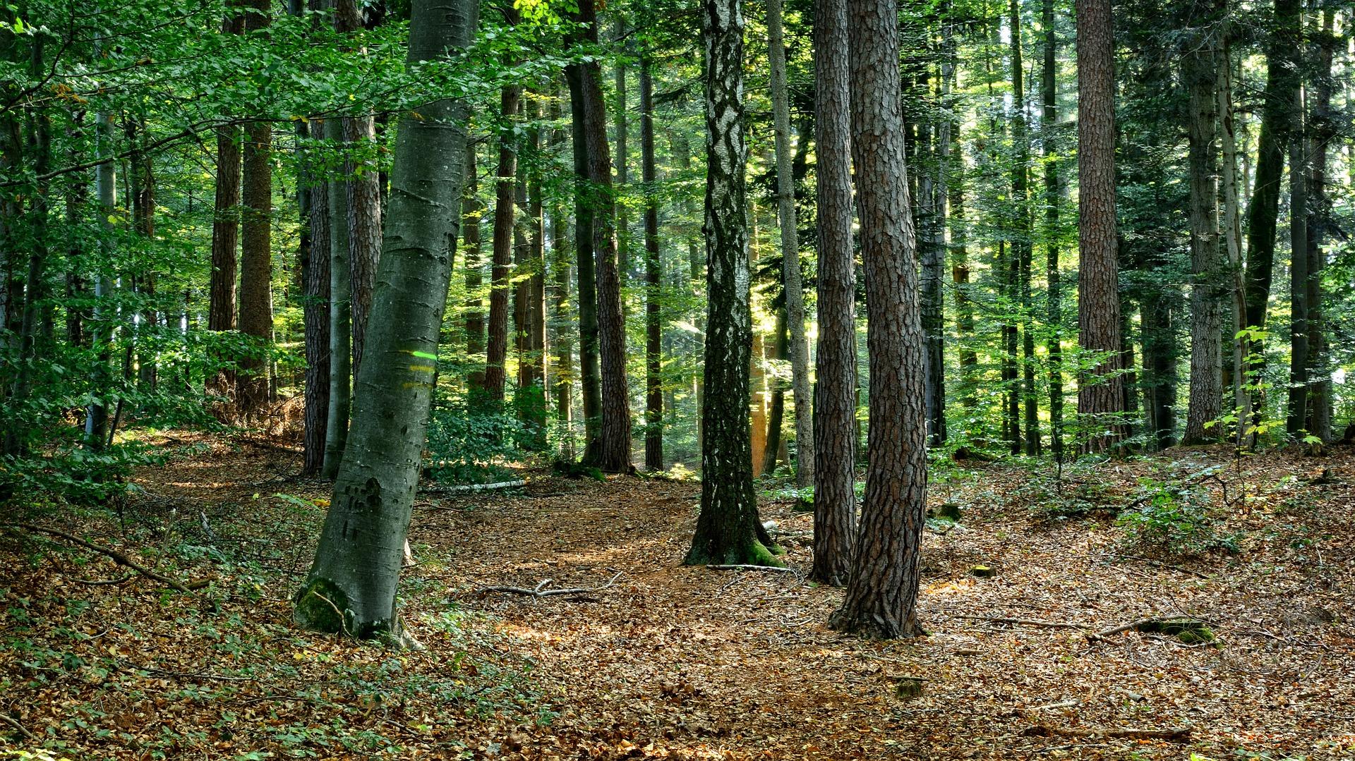Wald aufforsten Baum pflanzen