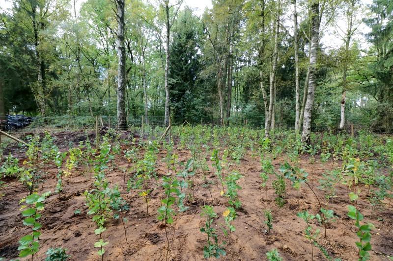 Fertig bepflanzte Fläche