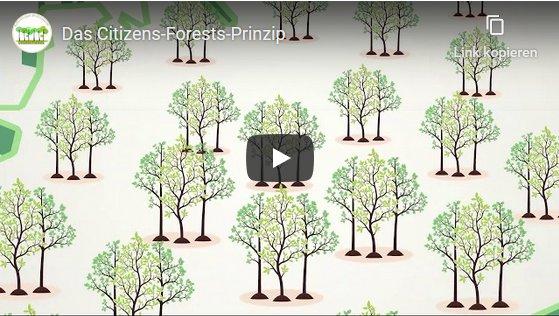 Das Citizens Forests Prinzip