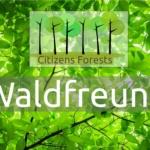 Waldfreund Aufforstung