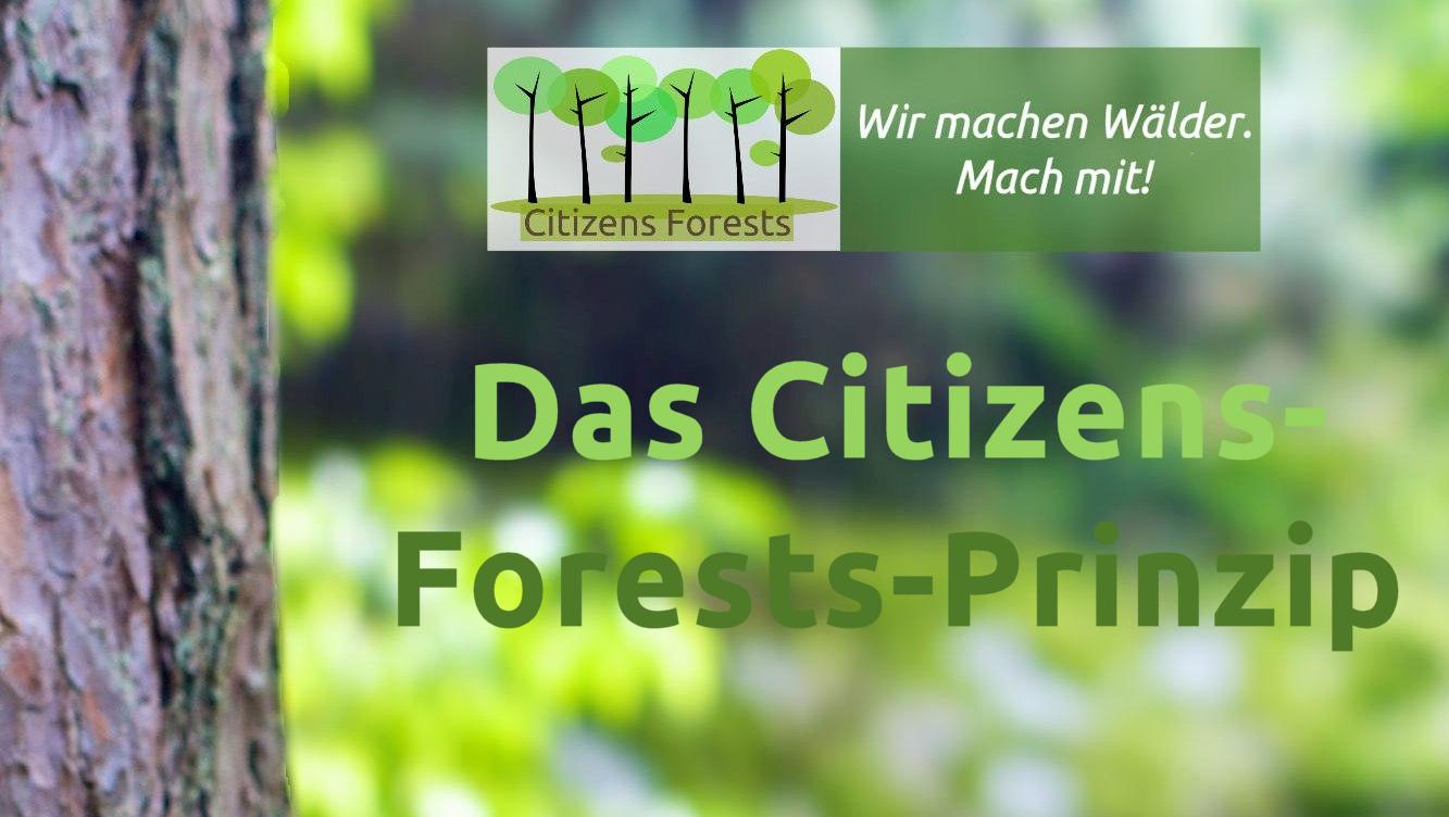 Das Citizens-Forests-Prinzip mit Miyawaki und Tiny Forests