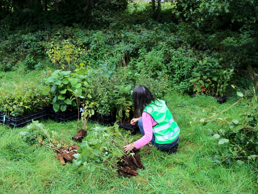 Einheitsbuddeln-2021-Citizens-Forests-Pflanzung-vorbereiten