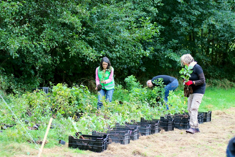 Einheitsbuddeln-2021-Citizens-Forests-Setzlinge-vorbereiten