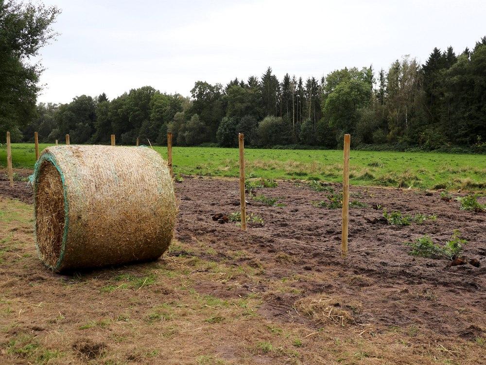 Einheitsbuddeln-2021-Citizens-Forests-vorbereitete-Flaeche