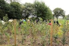 Einheitsbuddeln-2021-Citizens-Forests-Pflanzaktion-FB