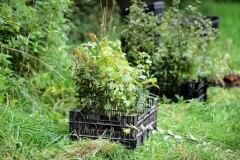 Einheitsbuddeln-2021-Citizens-Forests-Setzlinge-2