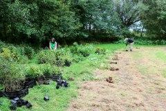 Einheitsbuddeln-2021-Citizens-Forests-Setzlinge-sortieren
