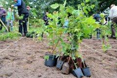 2020-Einheitsbuddeln-Citizens-Forests-Setzlinge