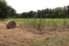 Einheitsbuddeln-2021-Citizens-Forests-Flaeche-fertig