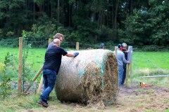 Einheitsbuddeln-2021-Citizens-Forests-Mulchen