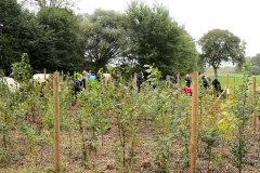 Einheitsbuddeln-2021-Citizens-Forests-Pflanzaktion